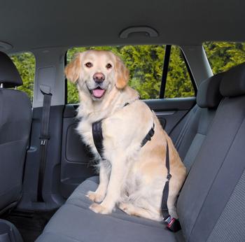 Autogordel + Veiligheidstuig  -  - Kwispel Korting