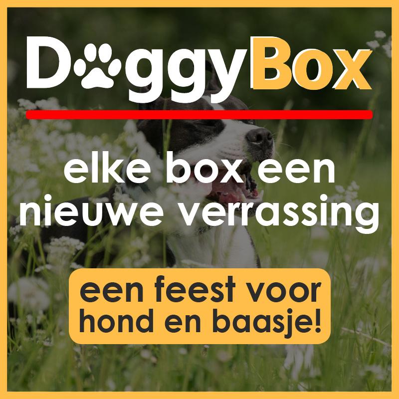 DoggyBox, een feest voor hond en baasje!