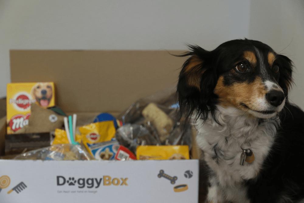 Voor de grote vriend - BOX-10-TOT-25-KG - DoggyBox