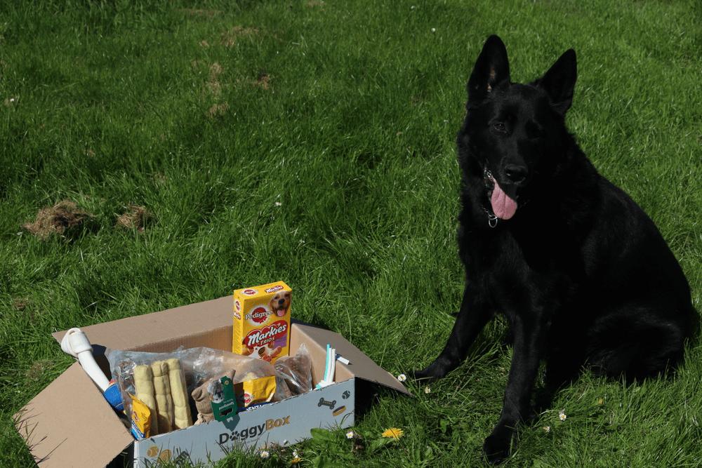 Voor de hele grote vriend - BOX-GROTER-DAN-25KG - DoggyBox